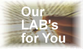 Our Lab is for you